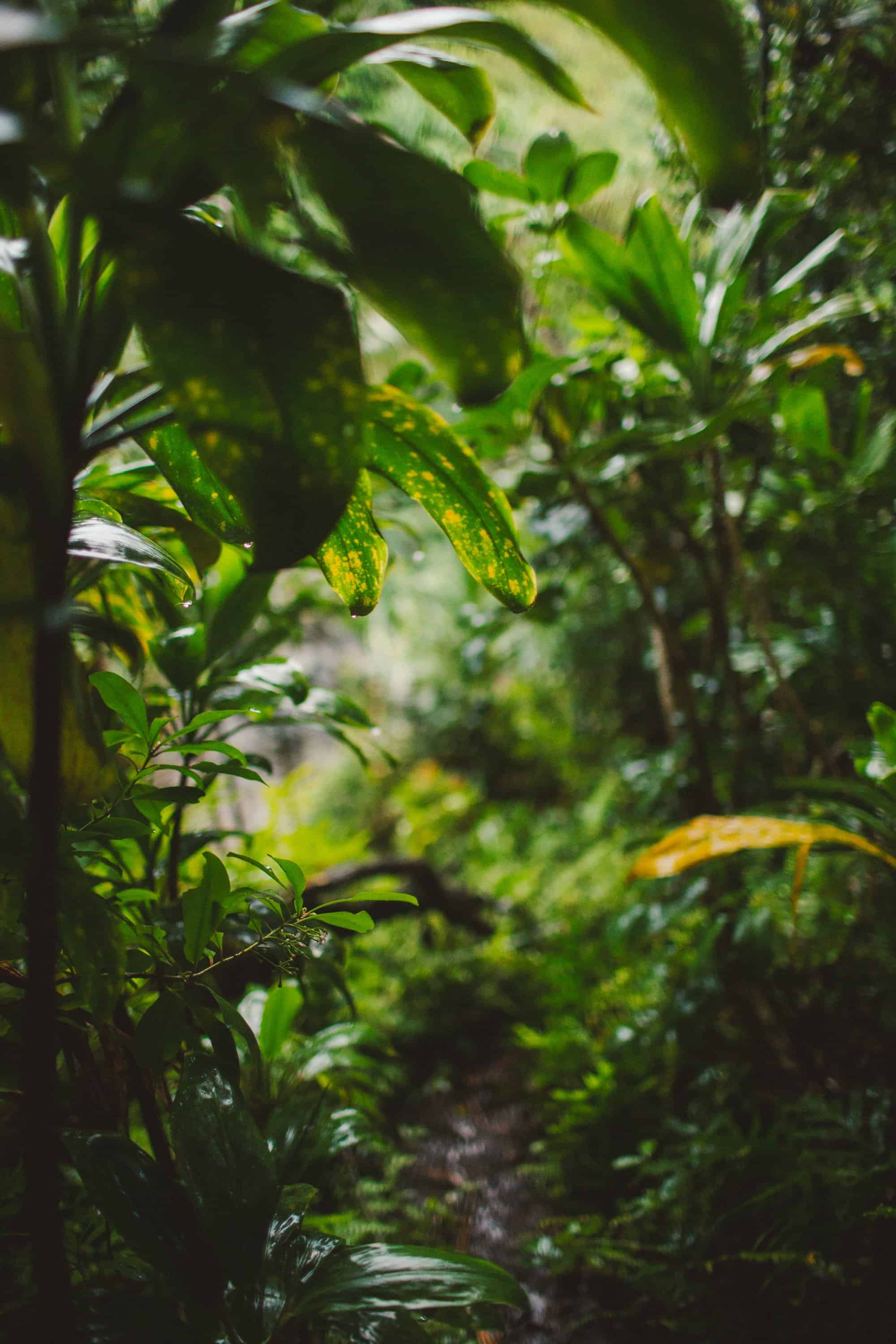maui-adventure-wedding-photography-48